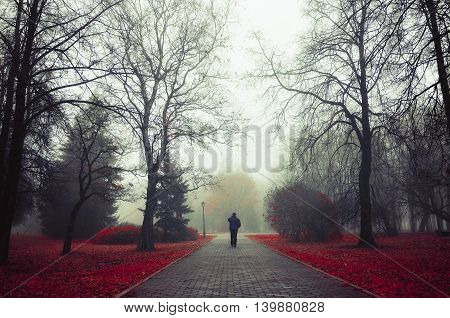 Autumn nature of foggy autumn alley in dense fog with lone passerby- foggy autumn landscape with autumn trees and red fallen leaves. Autumn alley in dense autumn mist. Soft filter applied.