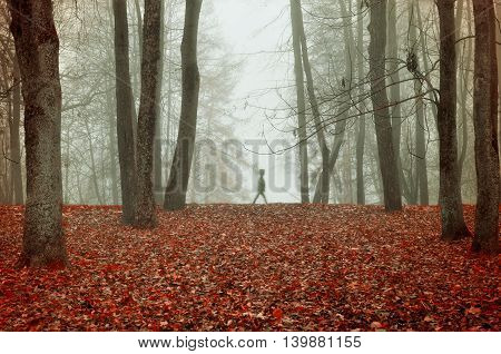 Autumn nature -foggy autumn view of autumn park in dense fog with ghostly silhouette- autumn landscape with autumn trees and red dry fallen leaves. Autumn park in dense autumn fog. Soft focus applied.