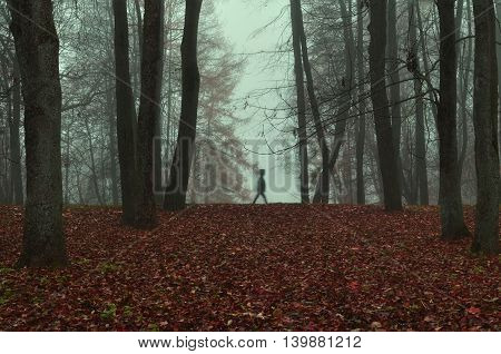 Autumn foggy mysterious autumn view of autumn park in dense fog with ghostly silhouette- autumn landscape with autumn trees and red fallen leaves. Autumn park in dense autumn fog. Soft focus applied.