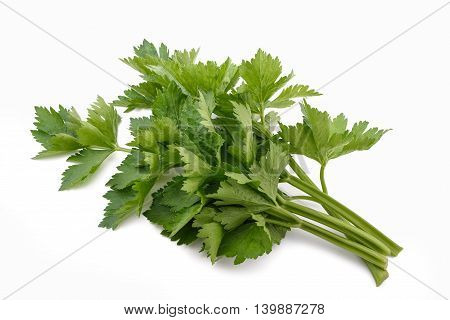 Green Celery Bunch