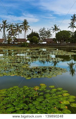 Pond in Candidasa - Bali Island Indonesia - nature travel background