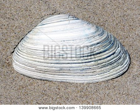 Seashell on the South Bethany Beach in Delaware 24 April 2016 Usa