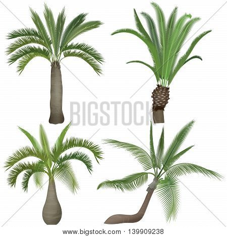 Exotic tropical realistic palm tree collection set.