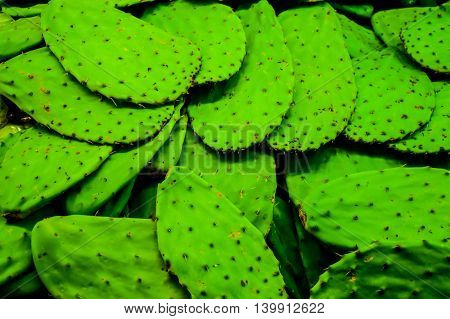 Cactus Leaves Background