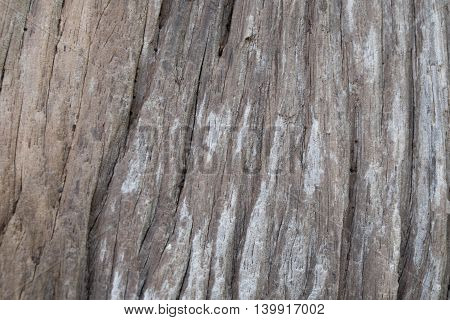 the brown wood pattern on old tree
