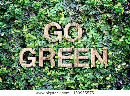 Go Green Made Of Wood Word On Leaves Wall,eco Concept