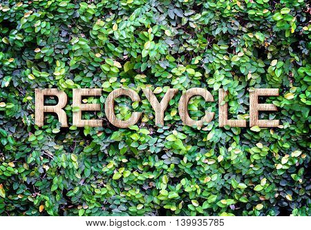 Recycle made of wood word on leaves wallEco concept.