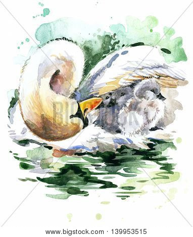 Swan watercolor. Swan and swan chick. Swan family watercolor illustration. Motherhood watercolor background
