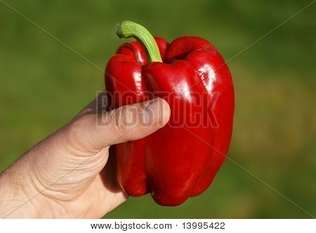 Red Pepper In Hand With Path