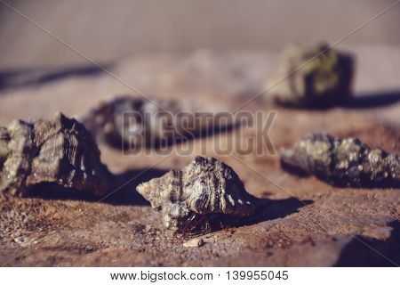 Beautiful seashells on the stone floor. Background with different seashells. Shallow depth of field. Toned image.