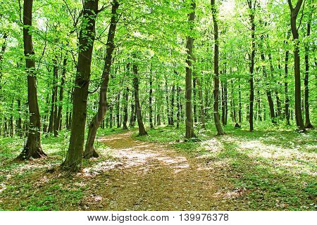 Nice view of forest in the spring time