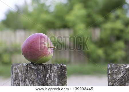 Ripe apple of red color. Lying on an old wooden board fence.