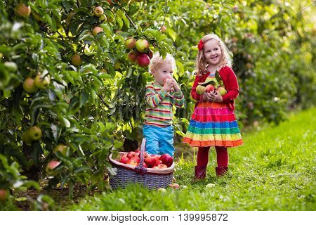 Child picking apples on a farm in autumn. Little girl and boy playing in apple tree orchard. Kids pick fruit in a basket. Toddler eating fruits at harvest. Outdoor fun for children. Healthy nutrition.