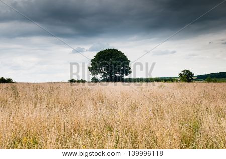 Dramatic Sky Over Field With Solitary Tree