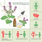 Clary sage Essential Oil Benefits. Aromatherapy infographic. All objects are conveniently grouped and are easily editable. poster