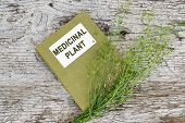 Medicinal plant shepherd's purse (Capsella bursa-pastoris) and herbalist handbook on old wooden table. Used in herbal medicine healthy eating as well as for cosmetics purposes poster