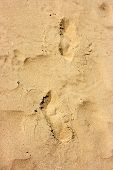 Human trace of a foot on yellow sand poster
