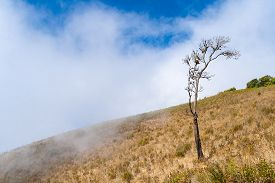 Lonely tree on the mountain at Kew mae pan nature trail Doi Inthanon national park Chiangmai Thailand