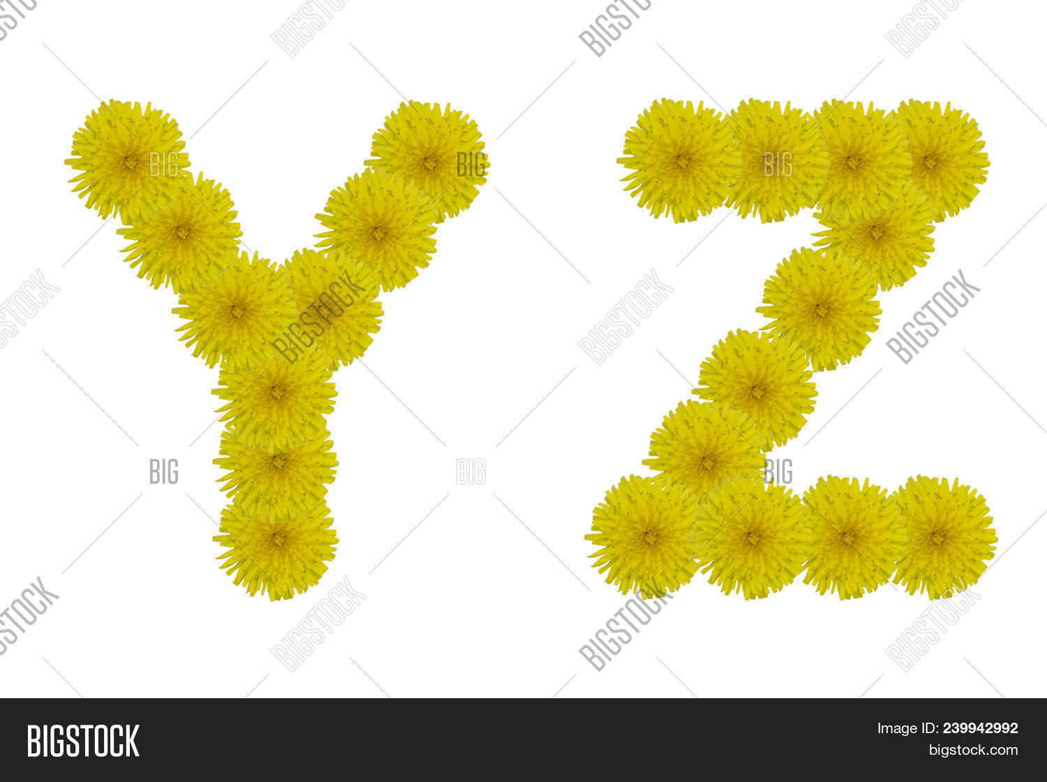 Floral Letters Y Z Image Photo Free Trial Bigstock