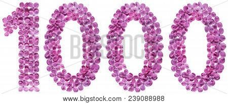 Arabic Numeral 1000, One Thousand, From Flowers Of Lilac, Isolated On White Background