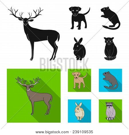 Puppy, Rodent, Rabbit And Other Animal Species.animals Set Collection Icons In Black, Flat Style Vec