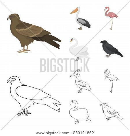 Kite, Pelican, Flamingo, Swan. Birds Set Collection Icons In Cartoon, Outline Style Vector Symbol St