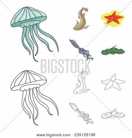 Jellyfish, Squid And Other Species.sea Animals Set Collection Icons In Cartoon, Outline Style Vector