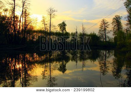 Wild Landscape With Sunset Under River. Trees Are Reflected In Water Of River During Sunset. Spring