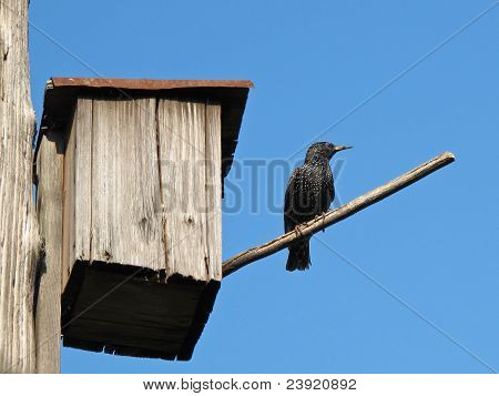 Starling-house