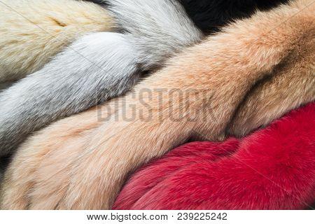 Fur, Colored Naturar Fur Texture. Closeup Photo