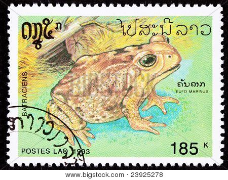 Canceled Laotian Postage Stamp Marine Cane Toad Bufo Marinus