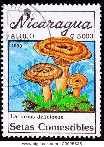 Canceled Nicaragua Postage Stamp Mushroom Saffron Milk Cap Lactarius Deliciosus