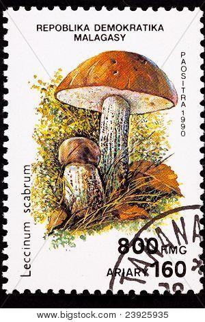Canceled Madagascar Postage Stamp Clump Birch Bolete Mushroom Leccinum Scabrum