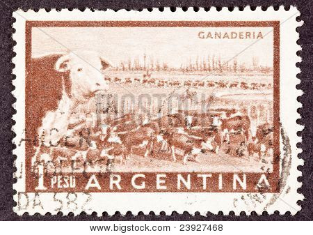 Canceled Argentinean Postage Stamp Heard Of Beef Cattle Argentina Pampas