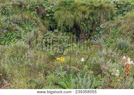 A Fountain And Indigenous Flowers And Plants Along The Contour Path Above The Van Heiningen Pass At