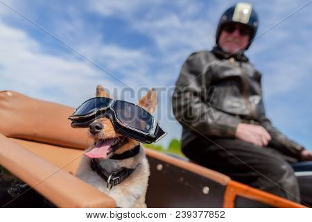 Shetland Sheepdog sits with sunglasses in a motorcycle sidecar poster