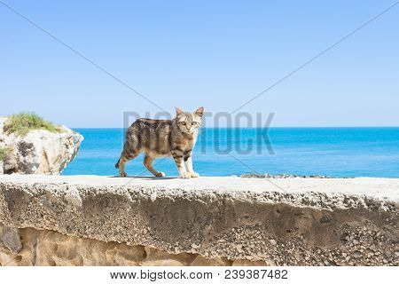 Vieste, Apulia, Italy - A Cat Walking On The Surrounding Wall Of Vieste