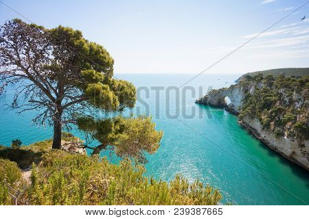 Grotta Della Campana Piccola, Apulia, Italy - Lonesome Tree At The Coastline