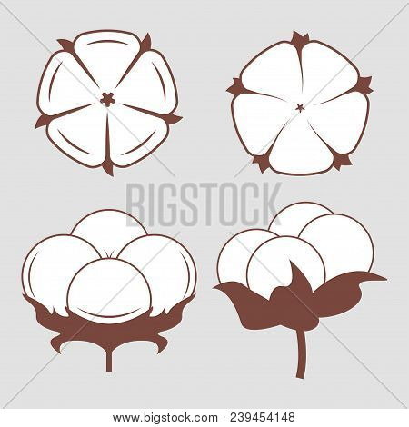 White Cotton Flowers Set. Vector Illustrations Set. Monochrome Stylized Pictures Of White Cotton Ico