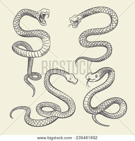 Hand Drawing Snake Set. Wildlife Snakes Tattoo Vector Design Isolated. Wild Snake Poisonous Sketch,