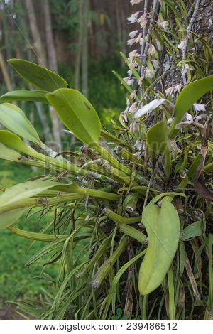 Orchid On The Big Tree, Stock Photo