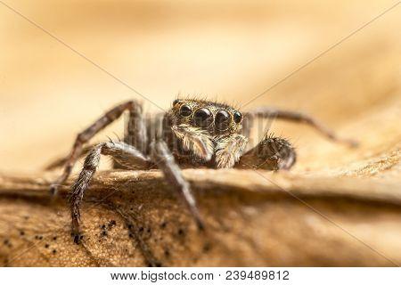 Macro Close Up Of Tropical Arachnid Spiders In The Wild Arachnophobia