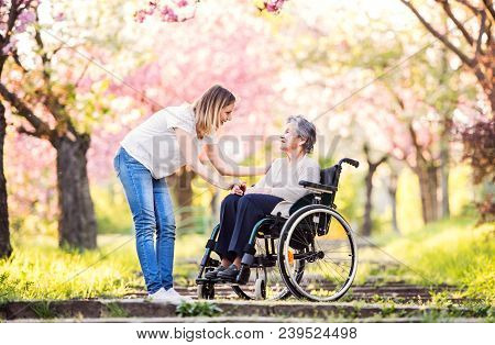 Elderly grandmother in wheelchair with an adult granddaughter outside in spring nature. poster