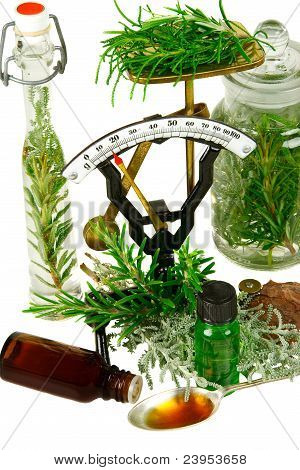 Herbs (rosemary And Differnt  Santolina Genus) For Medicine