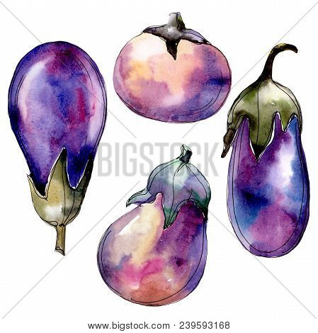 Violet Eggplant Vegetable In A Watercolor Style Isolated. Full Name Of The Vegetable: Eggplant. Aqua