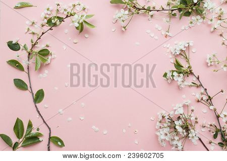 Group Of Cherry Branches With Blossom Isolated On Pink.