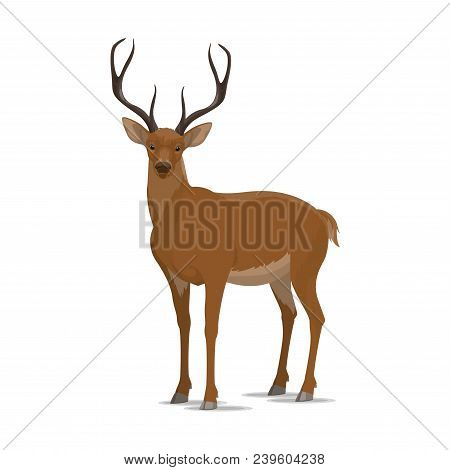 Deer Animal Icon. Vector Isolated Zoology Flat Design Of Forest Wild Deer Or Reindeer Buck With Antl