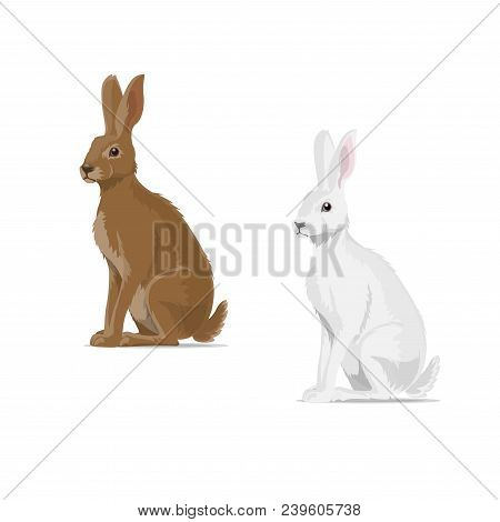 Hare Or Rabbit Animal Icon. Vector Isolated Zoology Flat Design Of Forest Wild Jackrabbit Hare White