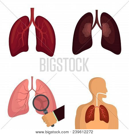 Lung Organ Human Breathing Icons Set. Flat Illustration Of 4 Lung Organ Human Breathing Vector Icons
