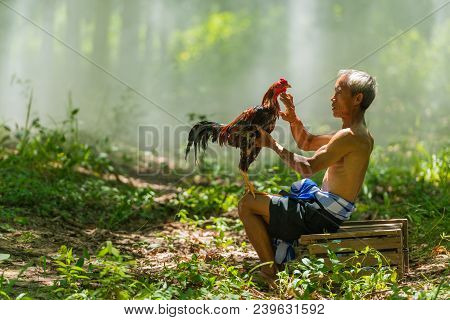 Sakonnakhon, Thailand - July 30, 2016: Rural Old Man Playing With Domestic Fighting Cock In Public P